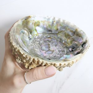coquille - abalone - large