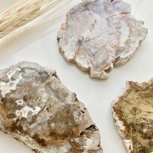 bois - petrifie - tranche - cristaux